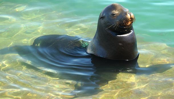 Seal Cabo San Lucas